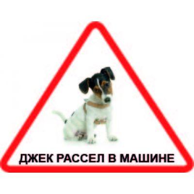 Наклейка треугольная с собакой 02 - Джек рассел