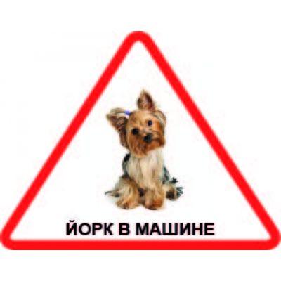 Наклейка треугольная с собакой 03 - Йорк