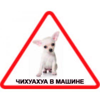 Наклейка треугольная с собакой 09 - Чихуахуа