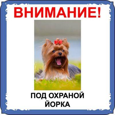 Табличка на  металле с собакой 03 - Йорк