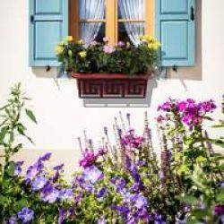 Как правильно посадить домашний цветок?