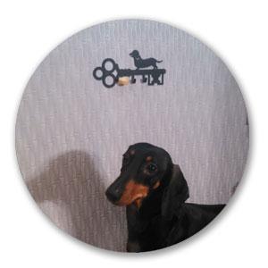 отзыв о ключнице собаке
