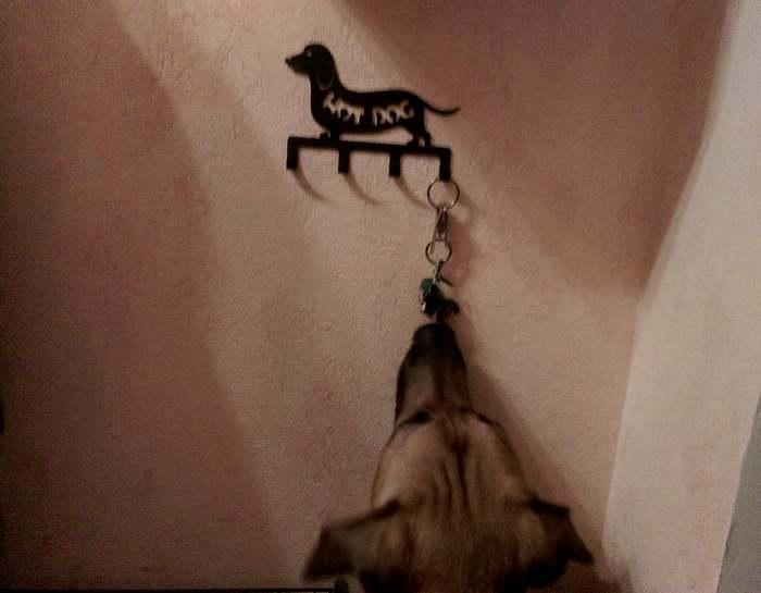 крючок собака от duck and dog