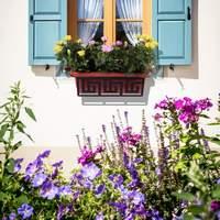 Как правильно посадить домашний цветок
